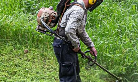 Día 11 –  Desinfectando los jardines