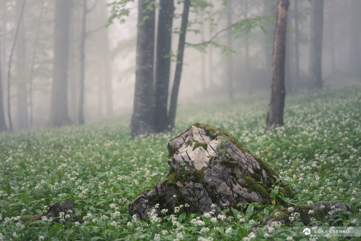 Primeval forest in Slovenia