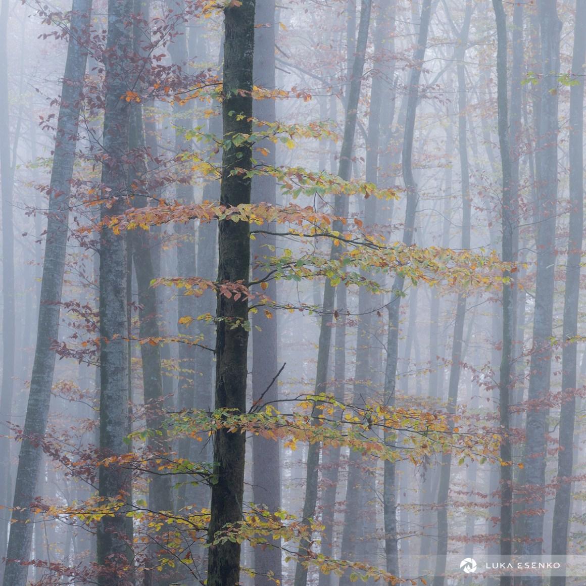Autumn Colours at Lake Bohinj
