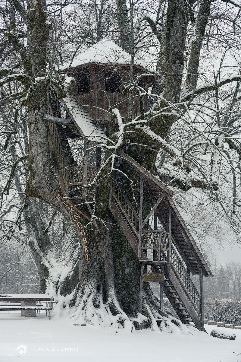Tree house at Nova Štifta
