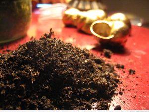 Ziemia z muszelkami w tle