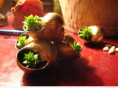 Piramida roślinek w muszelkach