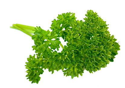 Image result for curly parsley