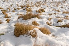 2348086-the-melting-snow-reveals-the-dead-grass-beneath-it-in-the-field