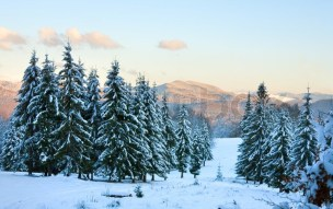 3290584-winter-sunset-mountain-landscape-with-rime-and-snow-covered-spruce-trees