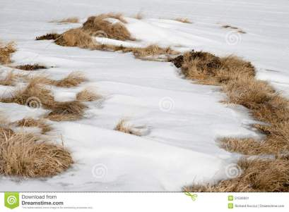 snow-dried-grass-covered-dead-mountains-51526001