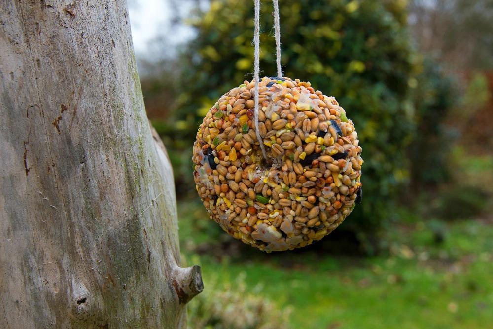 Bird Feeders for kids to make at https://lukeosaurusandme.co.uk