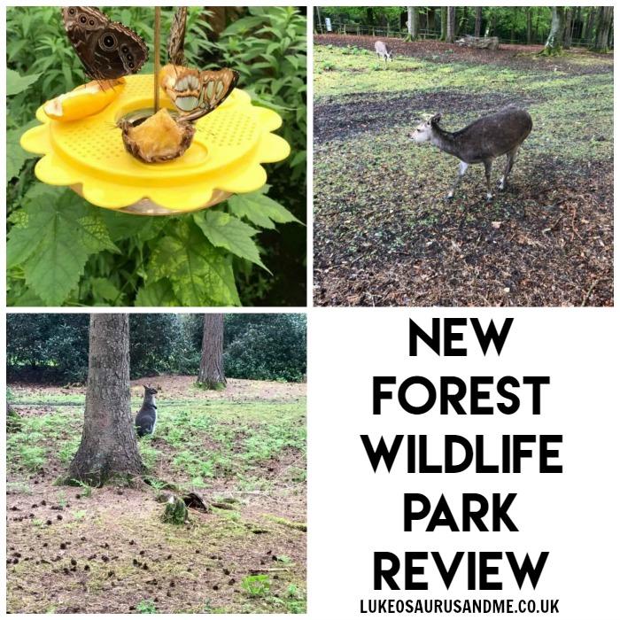 New Forest Wildlife Park Day Out Review at https://lukeosaurusandme.co.uk