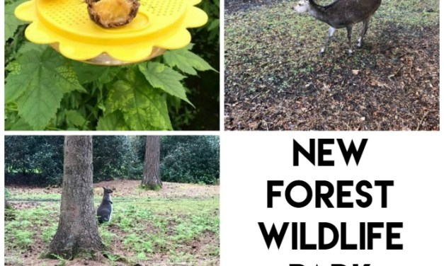 Days Out: New Forest Wildlife Park