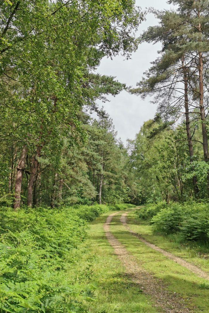 A woodland footpath leading through the Caesar's Camp area of Farnham