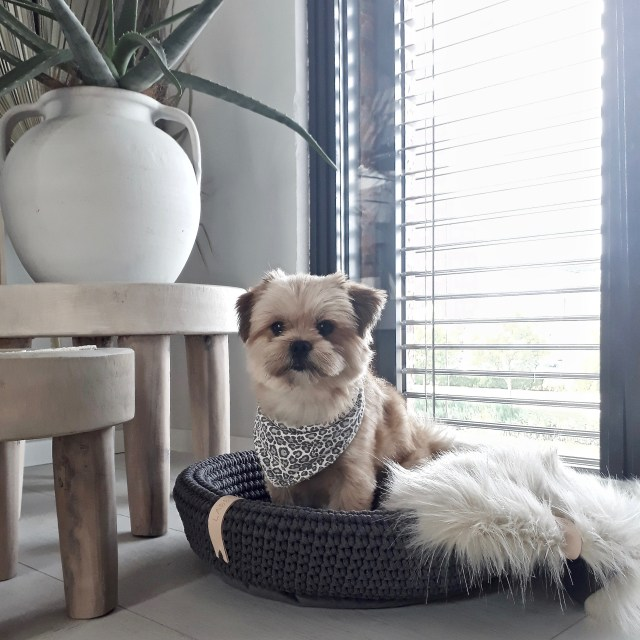 A small dog sitting in a grey crocheted dog bed for a blog post about luxury dog beds.