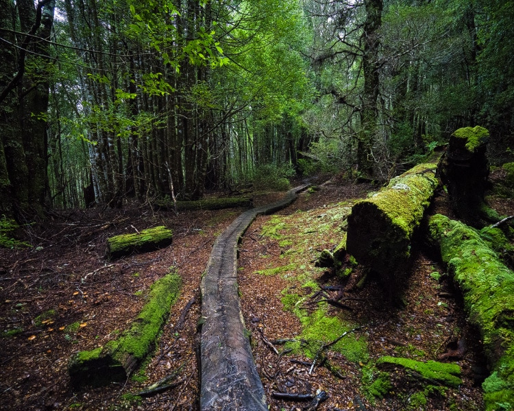 Walking through pristine old growth rainforest on Day 5