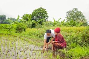 Foto prewedding petani