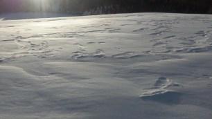 So stabil die Schneedecke auf dem Kuegelkamm auch aussieht, durch die Schneeverwehungen versinkt man darin mehr als knietief.