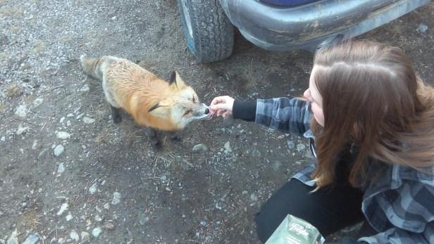 Ganz vorsichtig nimmt Louie die Salamischeibe aus meiner Hand