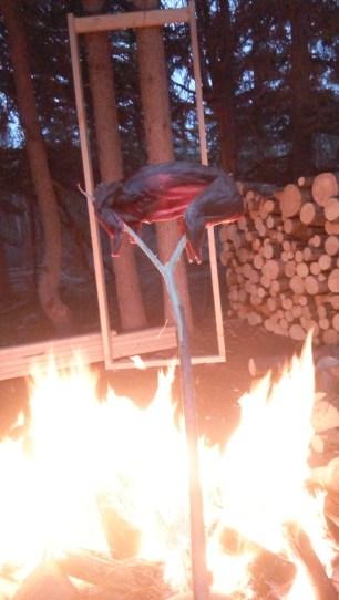 Das Hasenfleisch wird langsam ueber einem Lagerfeuer gegart. Die grossen Muskeln rechts gehoerten zu den Hinterlaeufen. Links war einmal ein Kopf dran.