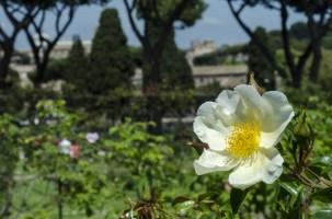 rose.garden004