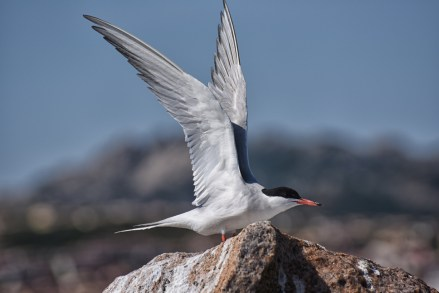 maddalena-s-birds002