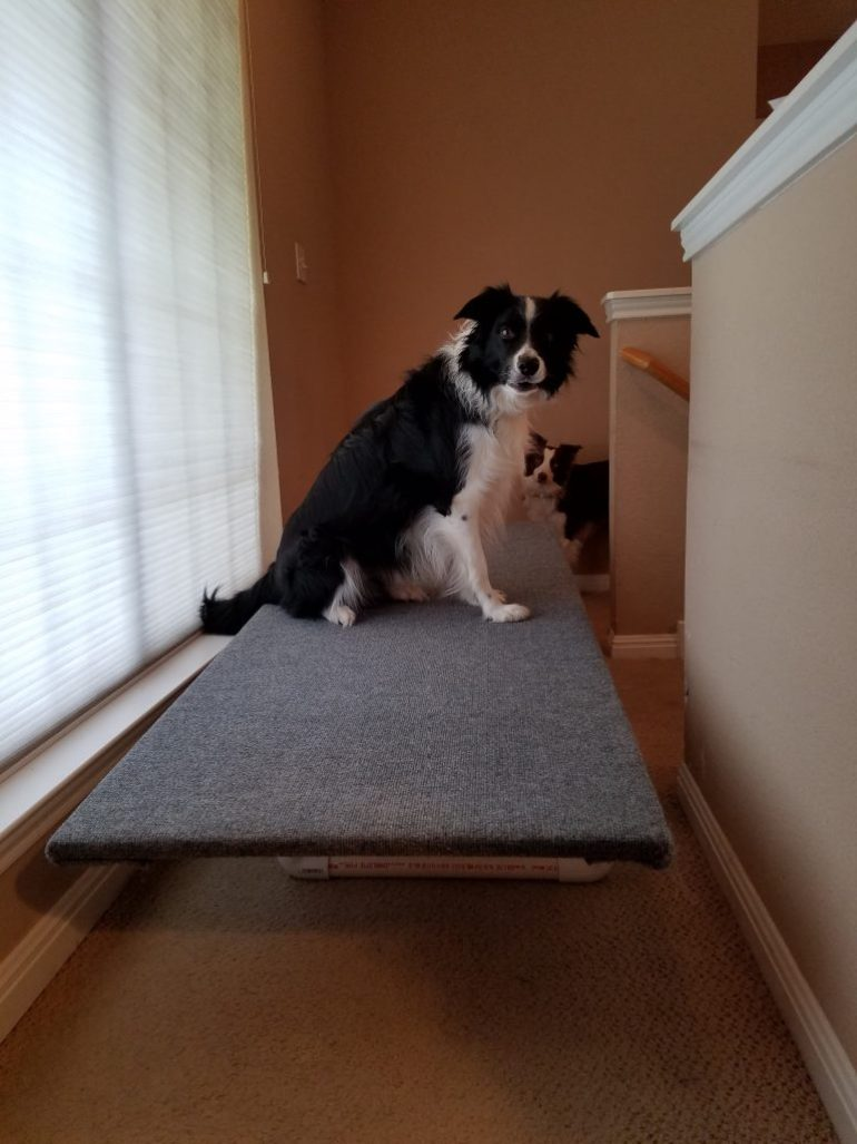 The pups checking out the camping bed. platform
