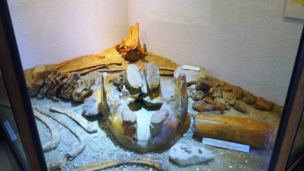 Site de Soyons -Musée Mammouth
