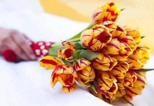 красно-оранжевый букет тюльпан