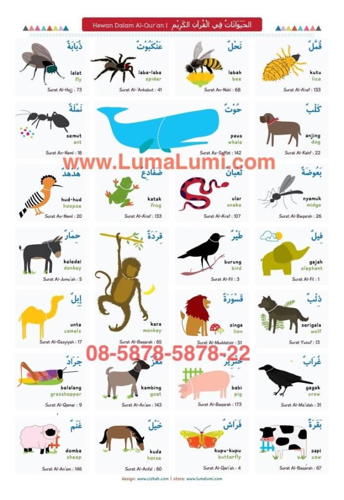 jual-poster-pendidikan-islam-hewan-dalam-al-quran-lumalumicom