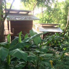 More of the cabins in the lush rainforest.