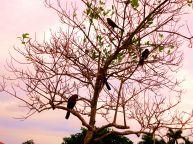 Birds on tree (1)