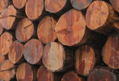 Fir Logs