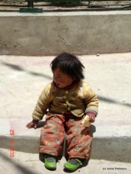 Copil tibetan