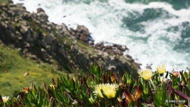Sintra - Cabo da Roca 03