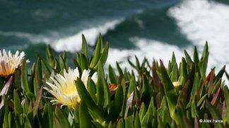Sintra - Cabo da Roca 04