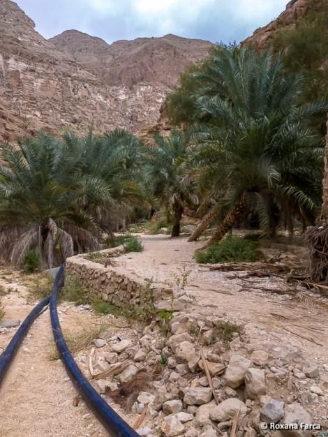 Oman_8513