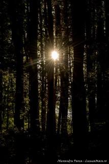 Apus printre copaci