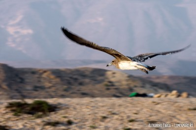 Oman-White-Sands-6884