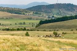 Peisaj agropastoral în Ținutul Zimbrului