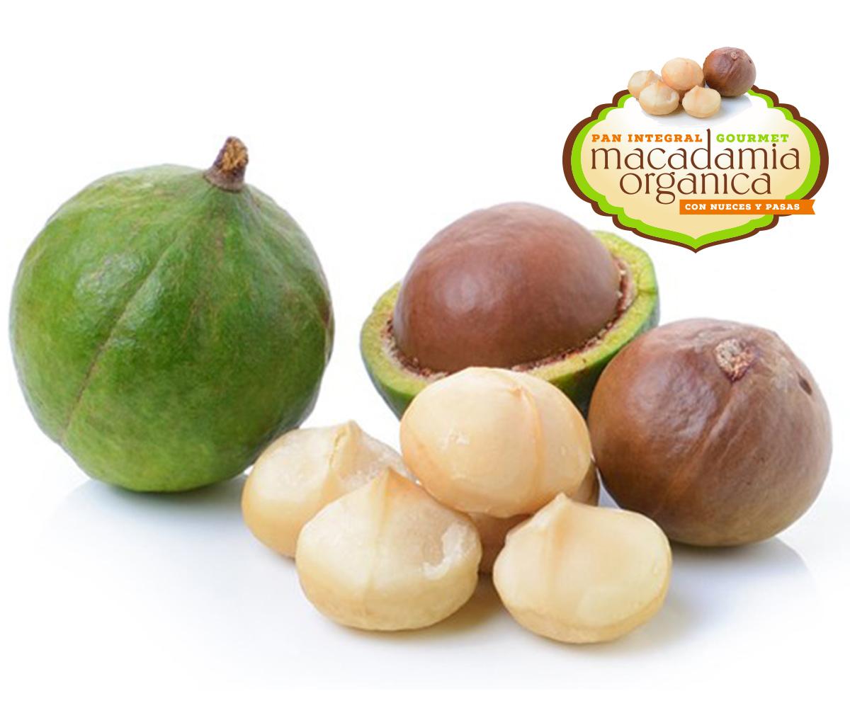 Beneficios Nutricionales de la Macadamia – Lumijor