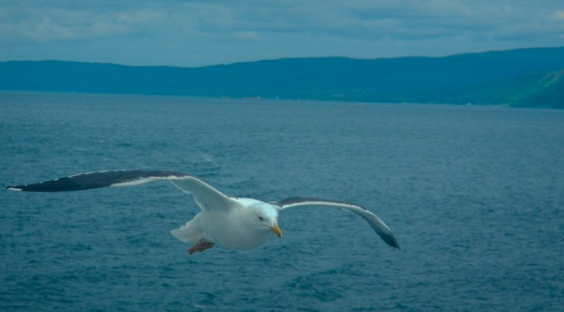 On the ferry back from Mull