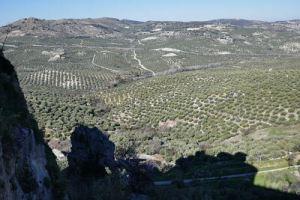 olivares desde Zuheros