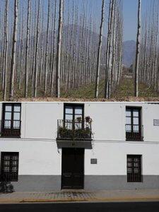 Choperas de Valderrubio. Casa natal de Federico G.L. en Fuente Vaqueros.