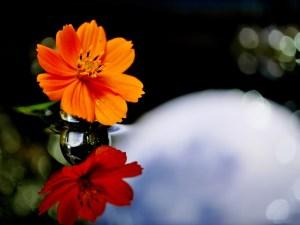 水滴と光の写真の撮り方 | LEICA MACRO 45mm