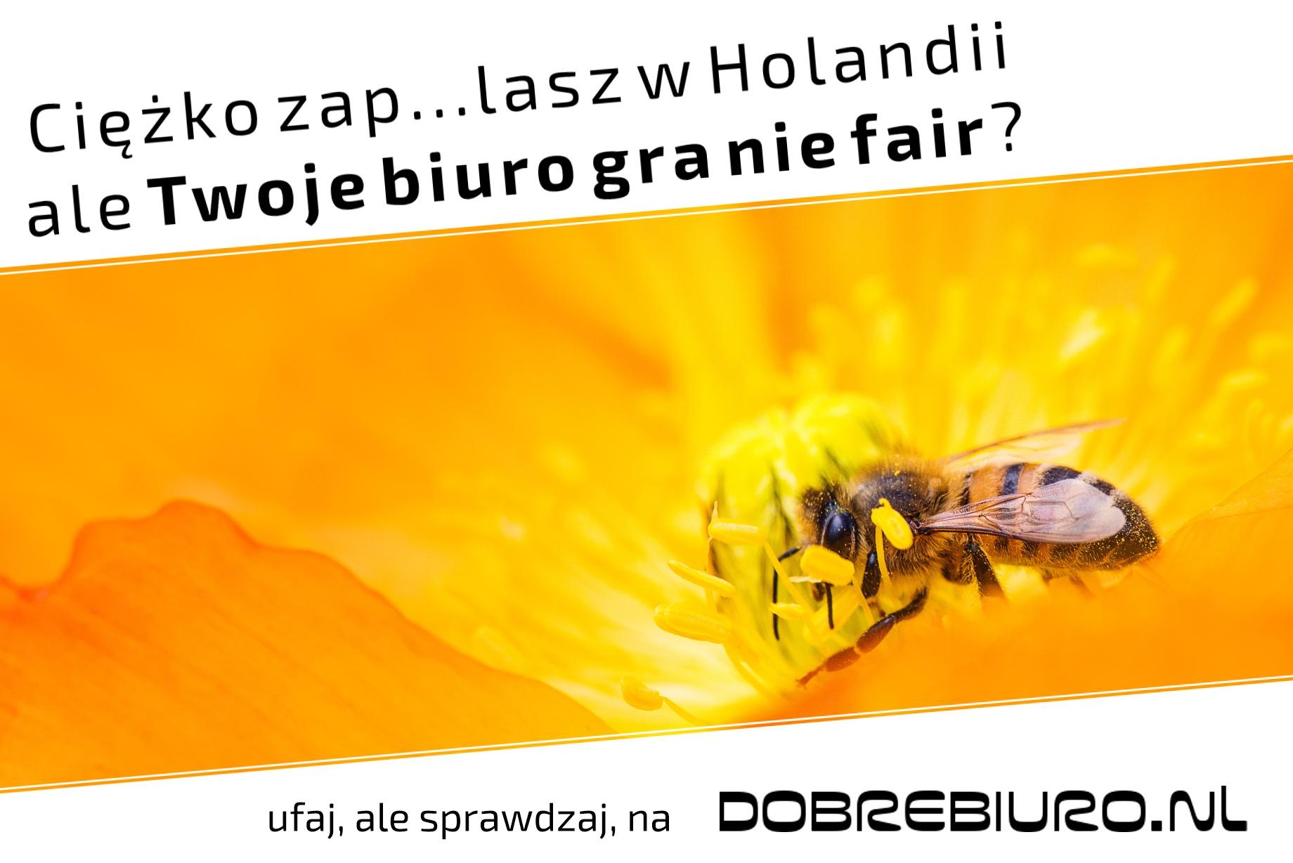 Porównaj najlepsze biura pracy w Holandii dzięki DobreBiuro.nl