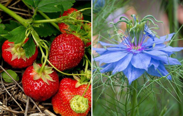 26 растений, которые всегда должны расти рядом на одной грядке
