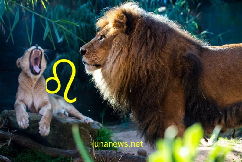 Львы — лучшие среди всех знаков Зодиака