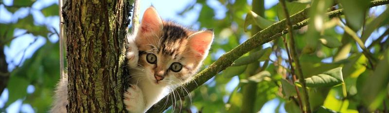 К чему снится Котёнок