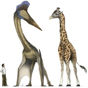 The size of the dinosaurs grew to the point where there were flying dinosaurs the size of giraffes.