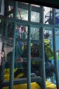Shark cage dive Point Defiance Zoo & Aquarium