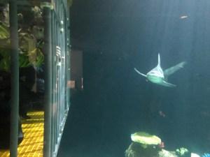 shark encounter at Point Defiance Zoo & Aquarium