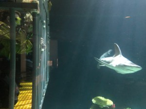 shark encounter Point Defiance Zoo & Aquarium cage diving