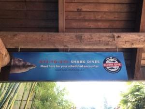 Eye-to-eye shark dive Point Defiance Zoo & Aquarium in Tacoma, Washington